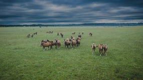 Vogelperspektive der Pferdeherde stockfotos