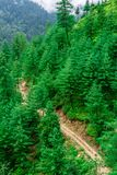 Vogelperspektive der Straße umgeben durch Deodar-Baum im Himalaja, sainj Tal, kullu, Himachal Pradesh, Indien stockbilder