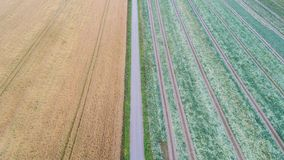 Vogelperspektive der Straße und des Grüns, gelbe Felder stockfoto