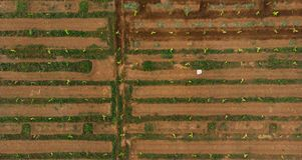 Vogelperspektive des Bauernhofes mit Berieselungssystem schmale Wasserbahnen wie ein Mann stellten Labyrinth her lizenzfreie stockfotos