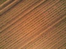 Vogelperspektive des bebauten Maisfeldes vom Brummen lizenzfreie stockfotografie