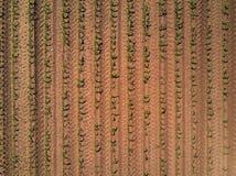 Vogelperspektive des bebauten Maisfeldes vom Brummen stockfoto