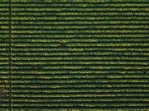 Vogelperspektive des bebauten Sojabohnenfeldes stockfoto