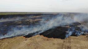 Vogelperspektive des Brennens des trockenen Grases auf dem Gebiet, fliegen vorwärts und unten Unfall- und Notereignisse stock footage