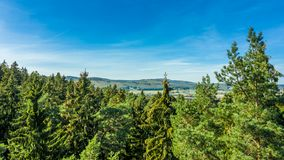 Vogelperspektive des enormen grünen frischen gesunden Baumwaldes stockfotos