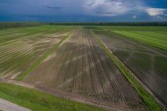 Vogelperspektive des fruchtbaren landwirtschaftlichen Feldes Lizenzfreies Stockfoto