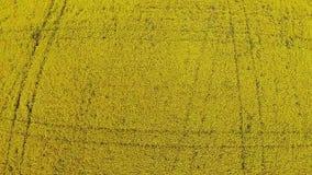 Vogelperspektive des gelben Feldes mit Vergewaltigung stock video footage