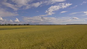 Vogelperspektive des goldenen Weizenfeldes Luftvideo stock video footage
