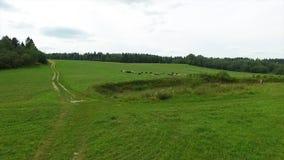 Vogelperspektive des grünen Feldes und des Sees Fliegen über das Feld mit grünem Gras und wenigem See Luftvermessung des Waldes n Stockfotografie