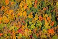 Vogelperspektive des Herbstlaubs in Vermont. Lizenzfreie Stockfotografie