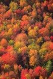 Vogelperspektive des Herbstlaubs in Vermont Lizenzfreie Stockfotografie