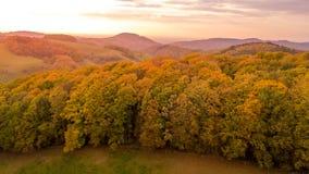 Vogelperspektive des Herbstwaldes Stockbild