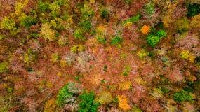 Vogelperspektive des Herbstwaldes bei Sonnenuntergang Erstaunliche Landschaft mit t Lizenzfreies Stockfoto