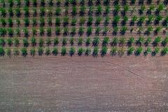 Vogelperspektive des landwirtschaftlichen Feldes des Herbstes und Reihen von grünem kleinem Lizenzfreie Stockfotos