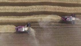 Vogelperspektive des modernen Mähdreschenweizens auf dem Feld Fliegen direkt über Mähdrescher Landwirtschaftsszene 4K stock video