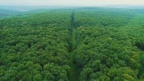 Vogelperspektive des nahtlosen Überganges des dichten Waldwachstums und ein langer Fußweg mitten in ihm stock footage