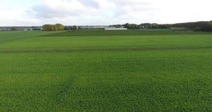 Vogelperspektive des natürlichen Feldes der Landwirtschaft, die Niederlande stock video footage
