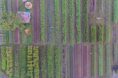 Vogelperspektive des organischen Gemüsebauernhofes Stockfotos
