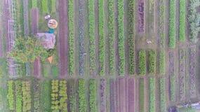 Vogelperspektive des organischen Gemüsebauernhofes Lizenzfreie Stockfotos