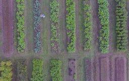 Vogelperspektive des organischen Gemüsebauernhofes Lizenzfreies Stockfoto