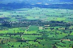 Vogelperspektive des Reisfelds und der Straße stockbilder