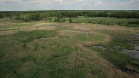 Vogelperspektive des Sumpfs landet mit weißem Reihernistplatz stock video footage