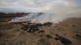 Vogelperspektive des trockenen Grases brennend auf dem Ackerland stock footage