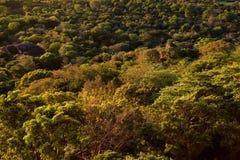 Vogelperspektive des tropischen Waldes von Sri Lanka Stockbilder