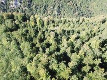 Vogelperspektive des Waldes in der pyrenean Landschaft, Frankreich lizenzfreies stockbild