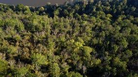 Vogelperspektive des Waldes in der Schlucht stock video footage