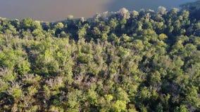 Vogelperspektive des Waldes in der Schlucht stock video