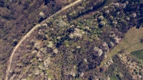Vogelperspektive des Waldes mit den wilden Kirschen, die in Frühling aufwecken stockbild