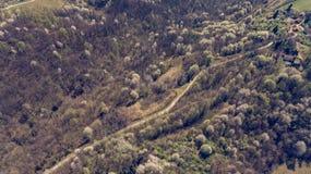 Vogelperspektive des Waldes mit den wilden Kirschen, die in Frühling aufwecken stockbilder
