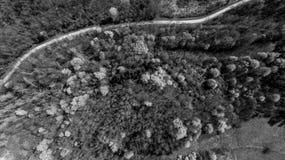 Vogelperspektive des Waldes mit den wilden Kirschen, die in Frühling aufwecken lizenzfreie stockfotos