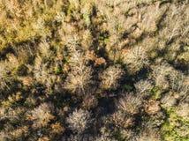 Vogelperspektive des Waldes von Castel Sant Elia in Italien Lizenzfreie Stockfotos