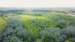 Vogelperspektive des Waldes während des Sommers clip Draufsicht der grünen Waldfläche stock footage