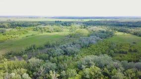 Vogelperspektive des Waldes während des Sommers clip Draufsicht der grünen Waldfläche stock video