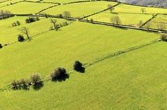Vogelperspektive des Weiden lassens von Feldern stockfotos