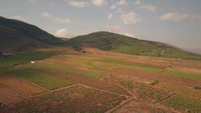 Vogelperspektive des Weinbergs im Gebirgsbereich von Sierra Nevada, Spanien stock video footage