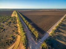 Vogelperspektive des Weinbergs im Winter in Süd-Australien Stockbild