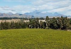 Vogelperspektive des Weinbergs in Marlborough-Region in Neuseeland Lizenzfreies Stockfoto