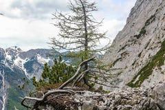 Vogelperspektive des Werfen-Dorfs in Österreich berühmt für Hohenwerfen-Schloss- und Eisriesenwelt-Eishöhle stockfotografie