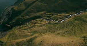Vogelperspektive des wilden Gebirgsflusses fließt in das Tal Hubschrauber, der über die Grünfelder in Island fliegt stock video footage