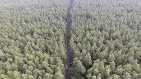 Vogelperspektive, die über alten ausgebesserten zweispurigen Waldweg mit beweglichen grünen Bäumen des Autos des dichten Holzes w stock video footage