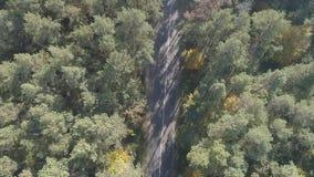 Vogelperspektive, die über alten ausgebesserten zweispurigen Waldweg mit beweglichen grünen Bäumen des Autos des dichten Holzes w stock footage