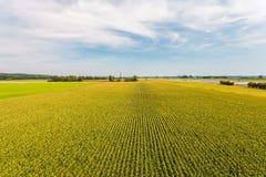 Vogelperspektive eines Bauernhoffeldes mit Reihen von Maispflanzen Lizenzfreies Stockbild