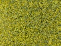 Vogelperspektive eines Feldes mit gelber Vergewaltigung in der Blüte auf einem Feld als Hintergrund Lizenzfreie Stockfotografie