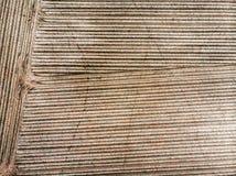 Vogelperspektive eines Feldes mit jungen Kartoffelpflanzen, geometrischer Effekt der frischen Pflugbahnen auf das Feld, abstrakte Stockbilder
