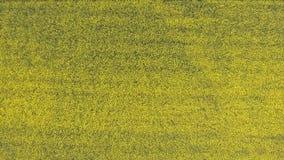 Vogelperspektive eines Rapsfelds stock footage