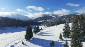 Vogelperspektive eines schneebedeckten Waldes mit hohen Kiefern und Straße im Winter stock video